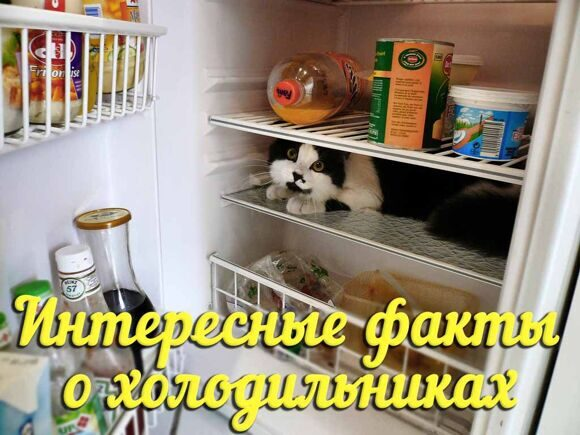 catfridge02